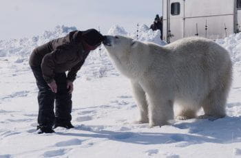A polar bear and man touch noses.