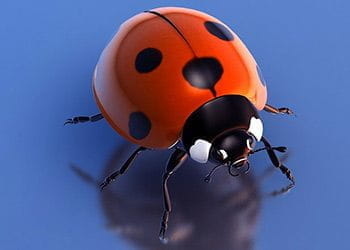 A red and black ladybug.