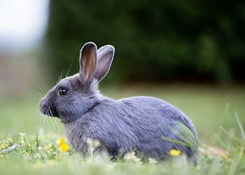 A rabbit sitting in a meadow.
