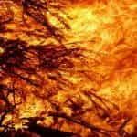 Bushfire.