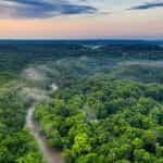 The treetops of the Amazon rainforest.