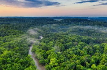 The treetops of the Amazon rainforest.