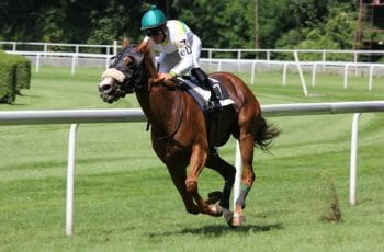 A jockey rides a horse around a track.
