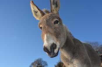 Donkey head and blue sky.