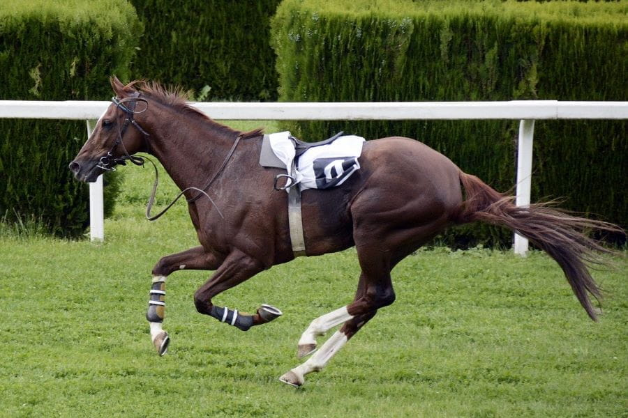 A horse running in a race with no jockey.