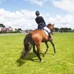A horse rider at a green racetrack.