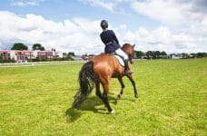 A horse rider at a green racetrack.