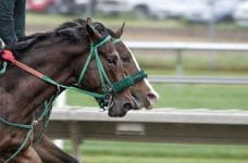 Two horses race around a track.