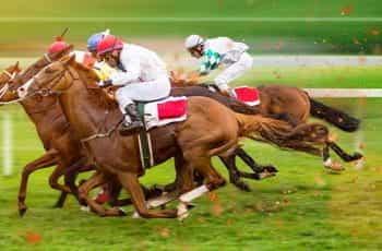 Race horses.