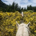 A row of horseback riders through the mountains in Argentina.
