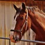 Seekor kuda di belakang gerbang.
