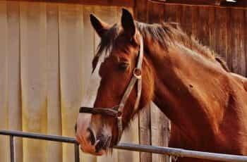 A horse behind a gate.
