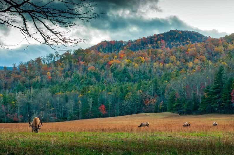 Dedaunan musim gugur di pegunungan di North Carolina, AS.