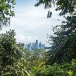 A view out of the Panamanian rainforest toward a city skyline.