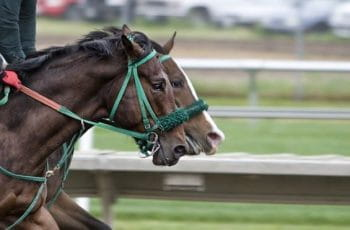 Two horses racing competitively.