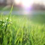 Green grass outdoors.