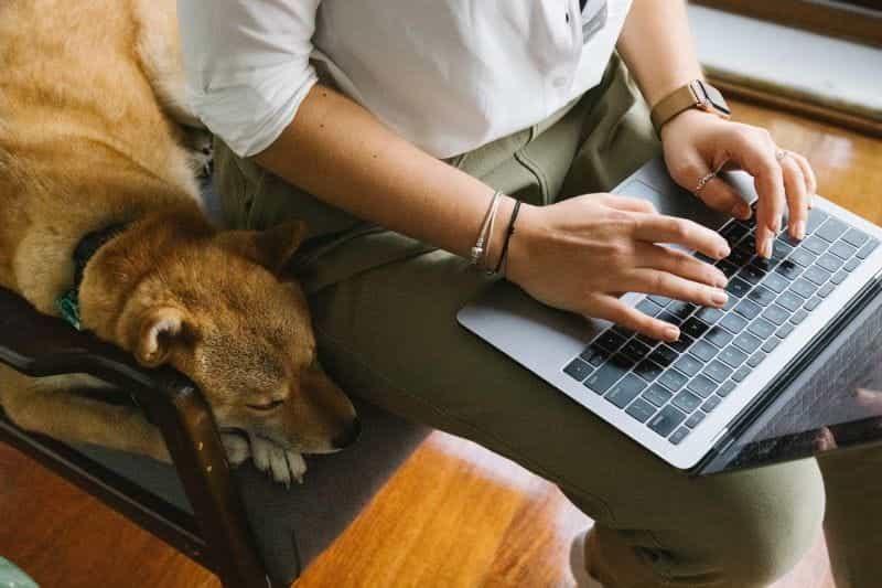 Seorang wanita dan anjing peliharaannya duduk di kursi sambil menggunakan laptopnya.