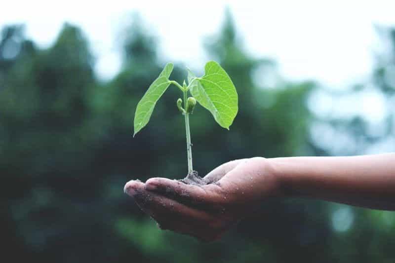Tangan seseorang memegang tanaman muda yang sedang tumbuh.