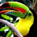 A toucan in Colombia.