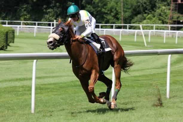 Seorang joki berhelm hijau membalap dengan kuda di sekitar lapangan berumput.