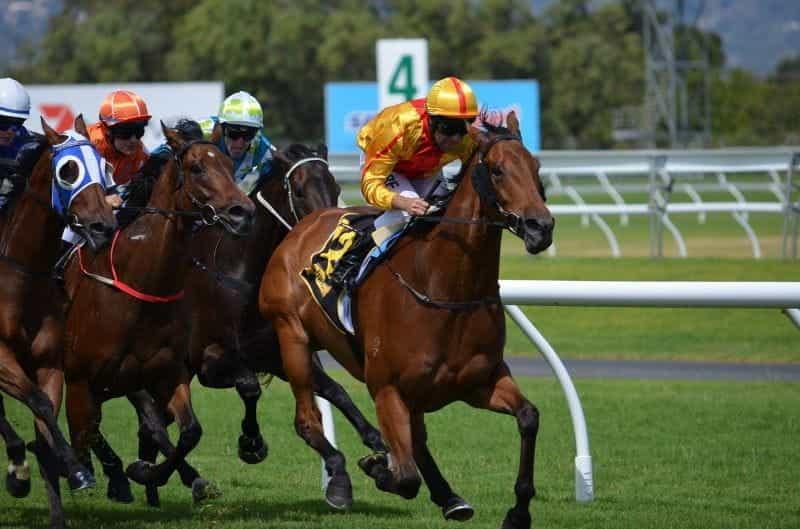 Joki balap kuda secara kompetitif di arena pacuan kuda.