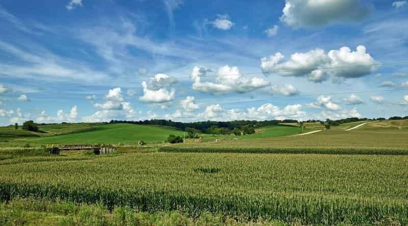 Pedesaan Iowan, menampilkan ladang jagung besar dan perbukitan.